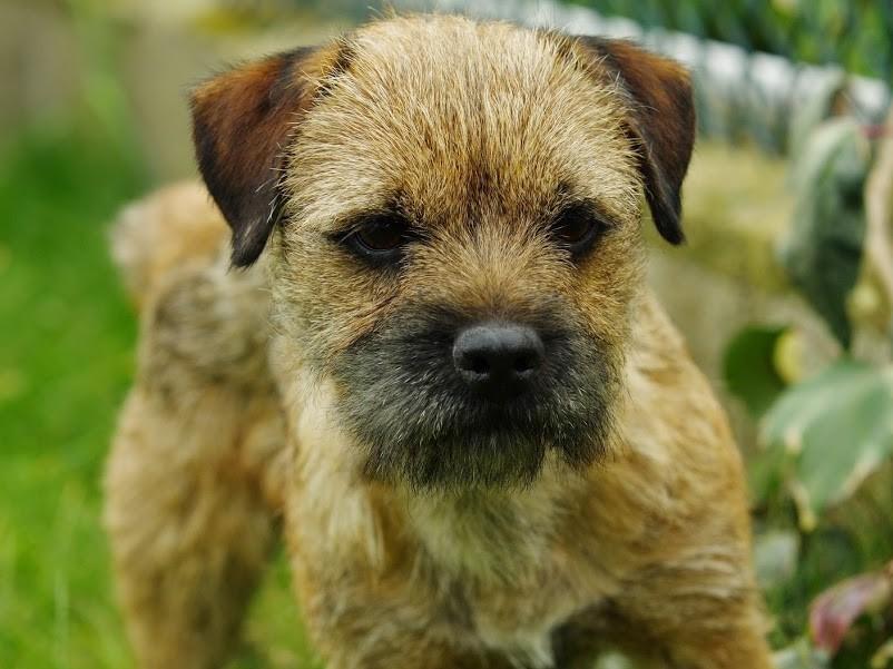 Greengrass Dog Name